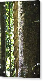 Wooden Ropes Acrylic Print by Debbie Cundy