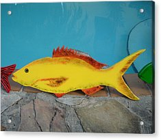 Wooden Yellow Tail Acrylic Print by Val Oconnor