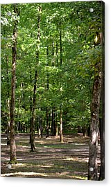 Woodforest 2013 Acrylic Print by Maria Urso