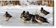 Woodies On Ice Acrylic Print by Thomas Pettengill