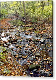 Woodland Brook In Fall Montgomery County Pennsylvania Acrylic Print