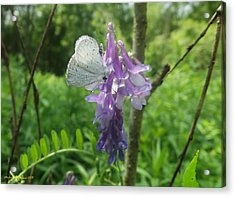 Woodland Butterfly Acrylic Print