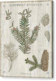 Woodland Chart II Acrylic Print by Sue Schlabach