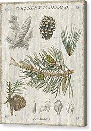 Woodland Chart IIi Acrylic Print by Sue Schlabach