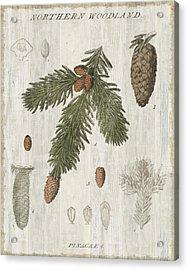 Woodland Chart V Acrylic Print by Sue Schlabach