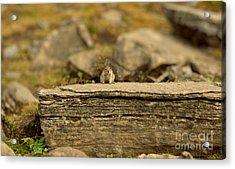 Woodland Critter Acrylic Print