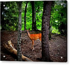Woodland Deer Acrylic Print
