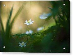 Woodland Deities Acrylic Print by Sarah-fiona  Helme