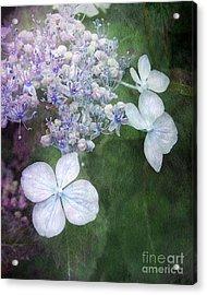 Woodland Hydrangea In Blue Acrylic Print