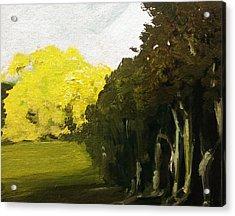 Woodland Light Acrylic Print by Paul Mitchell