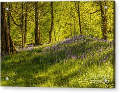 Woodland Of Bluebells Acrylic Print