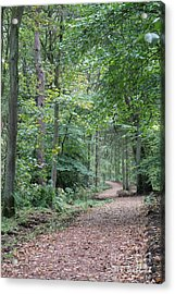 Woodland Path Acrylic Print