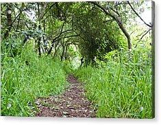 Woodland Pathway Acrylic Print by Tom Gowanlock