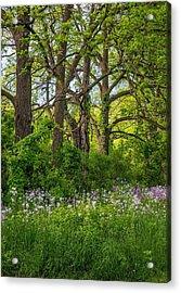 Woodland Phlox 2 Acrylic Print by Steve Harrington