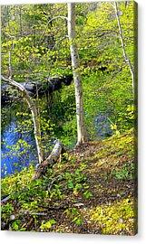 Woodland Stream In Spring Acrylic Print by A Gurmankin