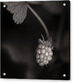 Woodland - Study 10 Acrylic Print by Dave Bowman