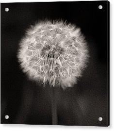 Woodland - Study 5 Acrylic Print by Dave Bowman