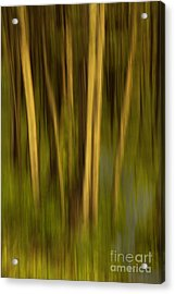 Woodland Tapestry Acrylic Print