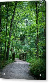 Acrylic Print featuring the photograph Woodland Trail by Wayne Meyer