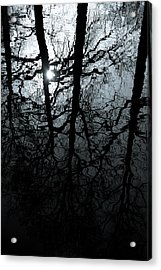 Woodland Waters Acrylic Print by Dave Bowman