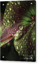 Woodoh 23 Acrylic Print by Cazyk Photography