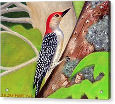 Acrylic Print featuring the painting Woodpecker by Janet Greer Sammons