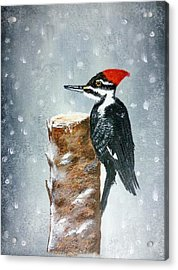 Woodpecker Acrylic Print by Valorie Cross
