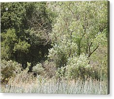 Acrylic Print featuring the photograph Woods By The Lake by Hiroko Sakai