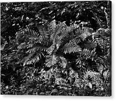 Wood's Ferns  Acrylic Print by Betty  Pauwels