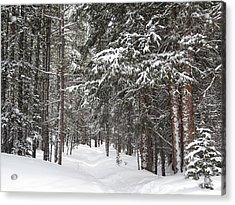 Woods In Winter Acrylic Print by Eric Glaser
