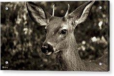 Woodside Deer Acrylic Print