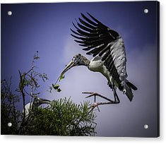 Woodstork Delicate Landing Acrylic Print