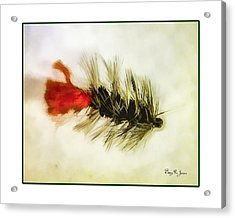 Fly Fishing - Woolly Bugger Acrylic Print