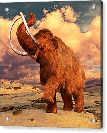 Woolly Mammoth Acrylic Print