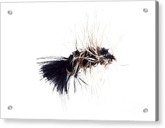 Acrylic Print featuring the photograph Wooly Bugger by Lawrence Burry