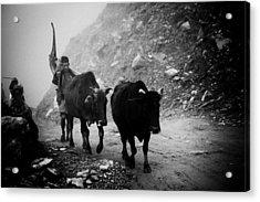 Work Hard Tamang People Langtang Nepal Acrylic Print