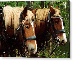 Acrylic Print featuring the photograph Workers by Susan Crossman Buscho