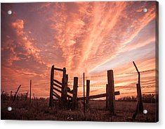 Working Cattle/ End Of Day Acrylic Print