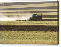 Working Farmer Acrylic Print by James BO  Insogna