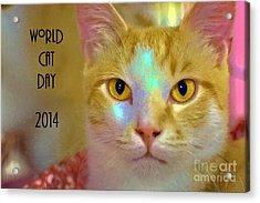 World Cat Day Acrylic Print