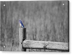 World Of Blue Acrylic Print
