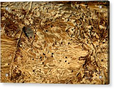 Acrylic Print featuring the photograph Worm Wood - 1 by Kenny Glotfelty