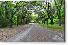 Wormsloe Drive Acrylic Print by D Wallace