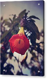 Worth It All Acrylic Print by Laurie Search