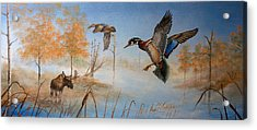 Would Duck Acrylic Print by Whitey Thompson