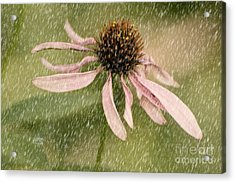 Wouldn't It Be Loverly Acrylic Print by Lois Bryan