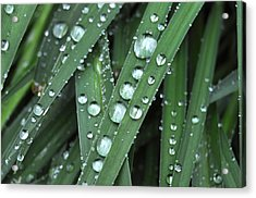 Wow Look At Those Droplets Acrylic Print