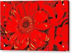 Wow Red Acrylic Print