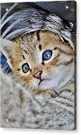 Wrapped In Mother's Love Acrylic Print
