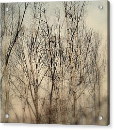 Wrapped In Snow Acrylic Print by Michelle Ayn Potter